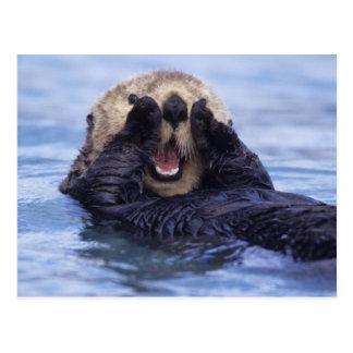 NA USA Alaska Sea otters are the largest Post Card