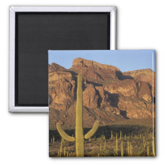 NA, USA, Arizona. Organ Pipe Cactus National Square Magnet