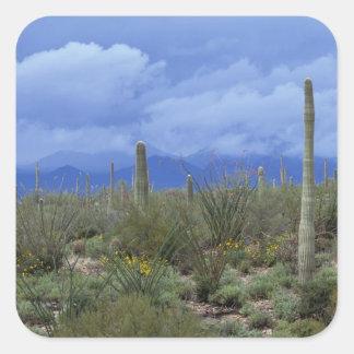 NA, USA, Arizona, Saguaro National Monument, Square Sticker