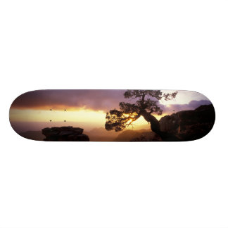 NA, USA, Arizona, Tucson, Sunset and lone Skate Boards