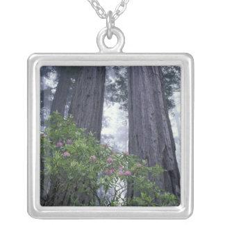 NA, USA, California. Del Norte Coast State Park. 2 Silver Plated Necklace