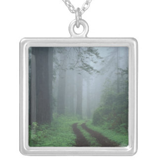 NA, USA, California. Del Norte Coast State Park. Silver Plated Necklace