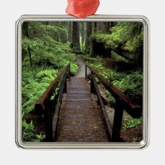 NA, USA, California, Jedidiah Smith Redwoods Silver-Colored Square Ornament