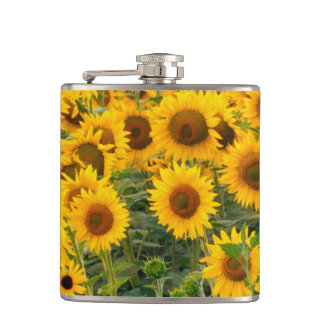 Na, USA, Colorado, Sunflowers Hip Flask