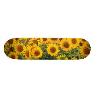 Na, USA, Colorado, Sunflowers Skate Board Decks