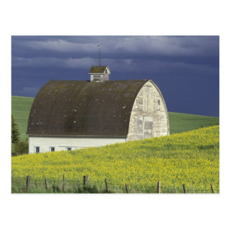 NA, USA, Idaho, south of Genesse, Canola field Postcard