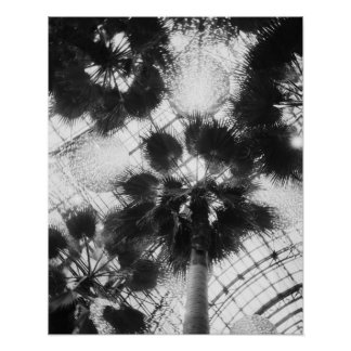 NA, USA, New York, New York City. Palm trees in Poster