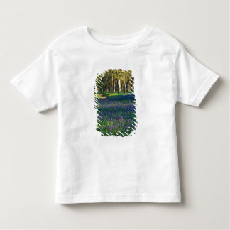NA, USA, Oregon, Salem. Field of camas and 3 Tshirt