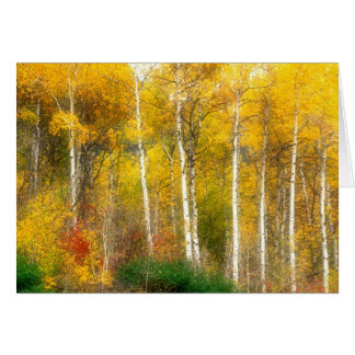 NA, USA, Washington, Fall Aspen Trees along Card