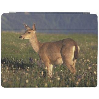 NA, USA, Washington, Olympic NP, Mule deer doe iPad Cover