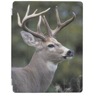 NA, USA, Washington State, White-tailed deer, iPad Cover