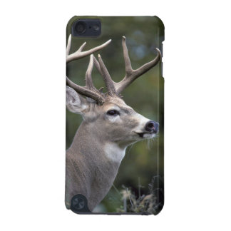 NA, USA, Washington State, White-tailed deer, iPod Touch (5th Generation) Covers