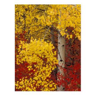 NA, USA, Washington, Wenatchee National Forest. Postcard