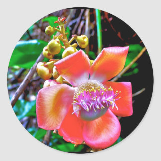 Naik Michel Photography Hawaii. Wallpapers images Classic Round Sticker