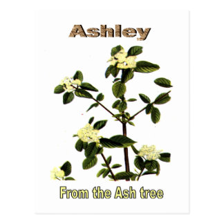 Names&Meanings - Ashley Postcard