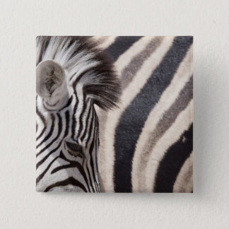 Namibia, Etosha National Park. Details of two 2 Inch Square Button