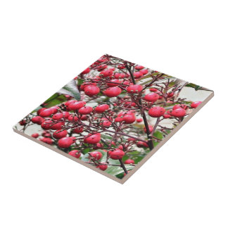 Nandina bush with red ripe berries tile