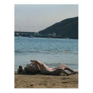 Nap Time... Postcard