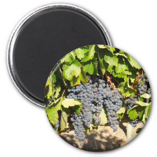 Napa Grapes 2 Inch Round Magnet