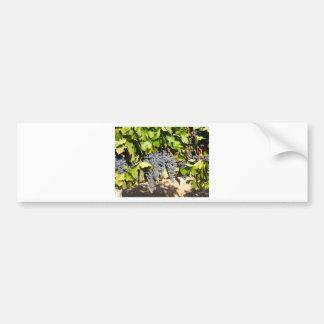 Napa Grapes Bumper Sticker