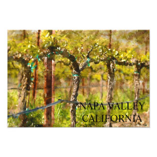 Napa Valley Grape Vines in Spring Photo Print