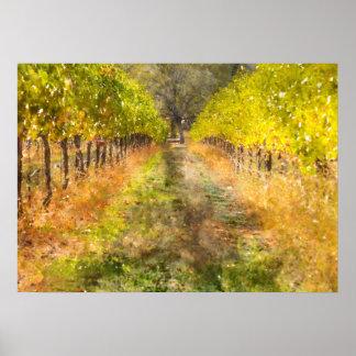 Napa Valley Vineyard in Fall Poster