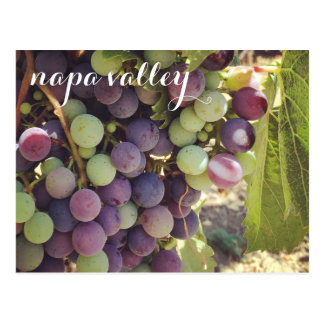 Napa Valley Vineyard Red & Green Grapes Postcard