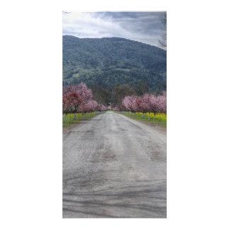 Napa Vineyard Road Personalized Photo Card