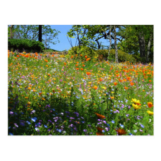 Napa wildflowers card