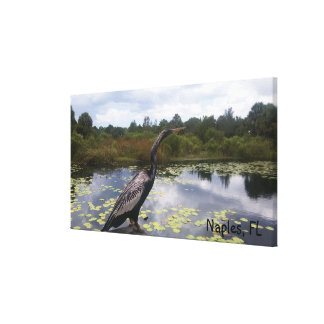 Naples, FL Anhinga Snakebird Close Up Picture Canvas Print