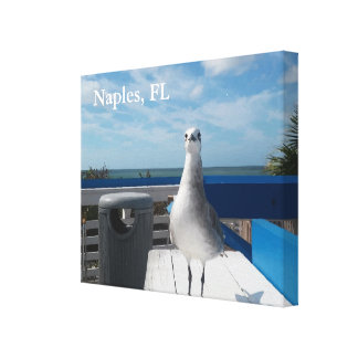 Naples, FL Seagull Picture Wrapped Canvas