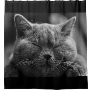 Napping Gray Cat Face