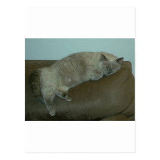 Napping Siamese Himalayan Cat, Gift, Decor Postcard