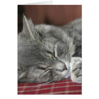 Napping Tabby Cat Notecard