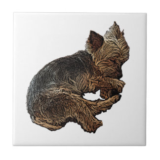 Napping Yorkie Tile