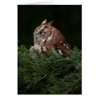 Naptime for Screech Owl note card