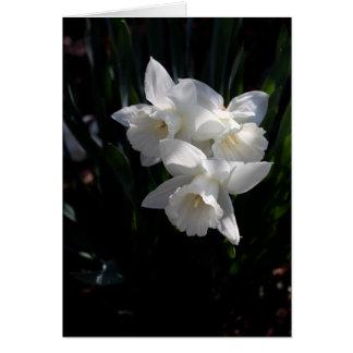 Narcisse blanc carte de correspondance