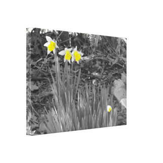 "Narcissus 'Ice Follies"" Canvas Print"