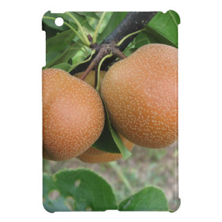 Nashi pears hanging on the tree iPad mini cases