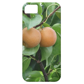 Nashi pears hanging on tree case for the iPhone 5