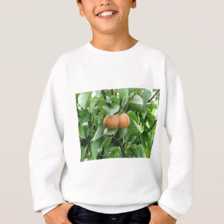 Nashi pears hanging on tree sweatshirt