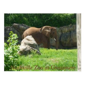 Nashville Zoo Postcard