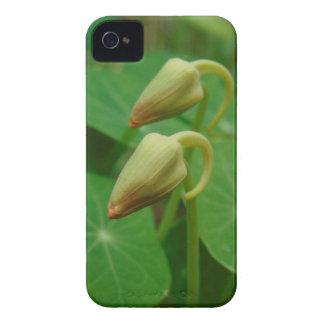 Nasturtium Buds iPhone 4 Case-Mate Cases