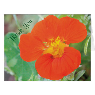 Nasturtium Flower Thank You Card