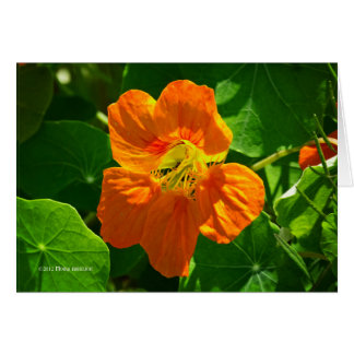 Nasturtium in orange card