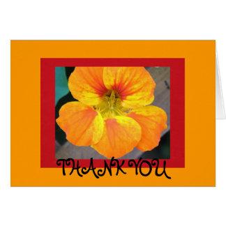 Nasturtium  - Thank you Card