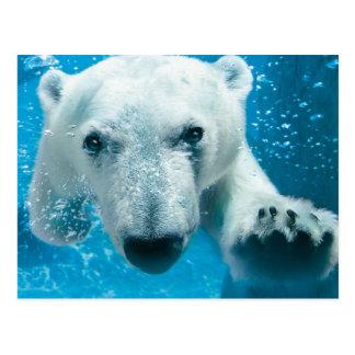 Natation d'ours blanc carte postale