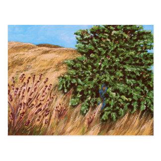 Nathanael and the Fig Tree Postcard