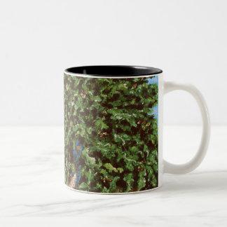 Nathanael and the Fig Tree Two-Tone Coffee Mug