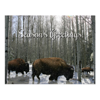 Native American Bison Season's Greetings Postcards